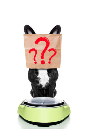 french bulldog  dog with guilty conscience  for overweight, and to loose weight , standing on a scale with paper bag over head , question marks as drawings