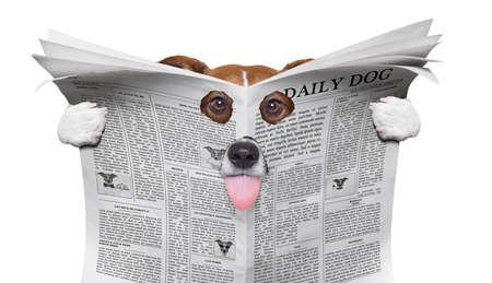 Spion nieuwsgierige hond gluren door gat in krant, papier of tijdschrift, geïsoleerd op een witte achtergrond, tong uitsteekt Stockfoto