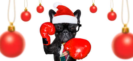 Boxer french bulldog dog with nerd glasses and sport gloves as an office business worker, isolated on white background, on christmas holidays vacation with santa claus hat