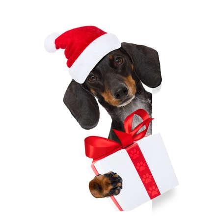 Chien de père Noël saucisse saucisse teckel drôle sur les vacances de Noël portant chapeau de vacances rouge, isolé sur fond blanc, derrière une bannière ou un cadre de plaque de tableau noir Banque d'images - 90063499
