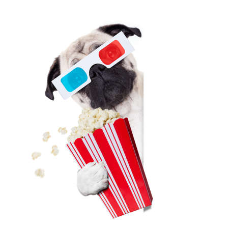 pug dog at cinema watching the  movies  with 3d glasses isolated on white background , with popcorn snak