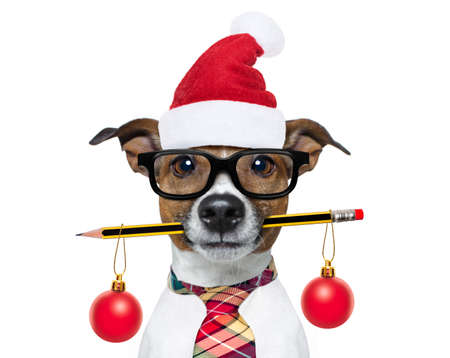 jack russell hond met potlood of pen in mond nerd bril dragen voor werk als baas of secretaresse, op kerstvakantie vakantie met kerstman hoed