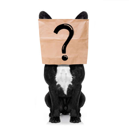 French bulldog , with a question mark drawing , hiding behind a paper bag on his head, isolated on white background Stock Photo