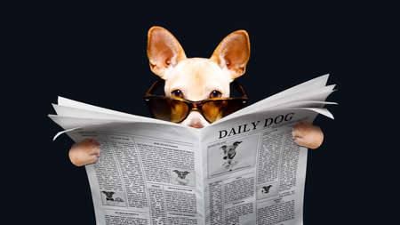 podenco dog reading a newspaper magazine , isolated on black  background, wearing sunglasses