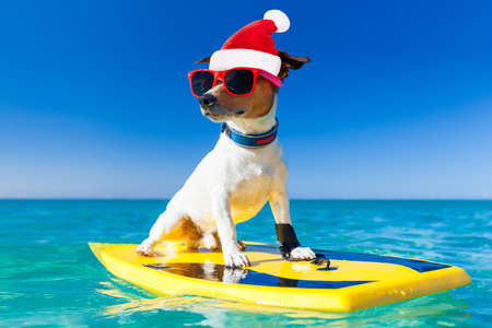 santa claus dog surfing on a surfboard wearing sunglasses  and red christmas hat  at the ocean shore on vacation holidays