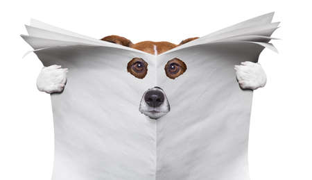 spy curious  dog  peeping  through hole in  empty blank  newspaper, paper or magazine, isolated on white background 写真素材