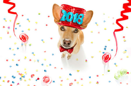 podenco dog celebrating new years eve with owner and champagne  glass isolated onwhite with  serpentine streamers and confetti