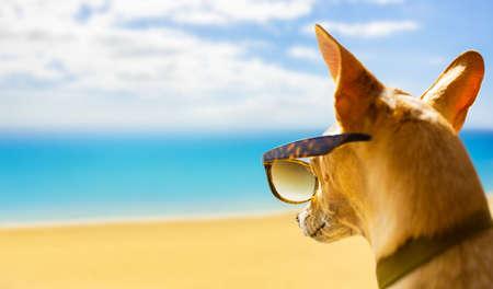 perro chihuahua mirando y mirando la playa y el océano usando gafas de sol divertidas, en vacaciones de verano