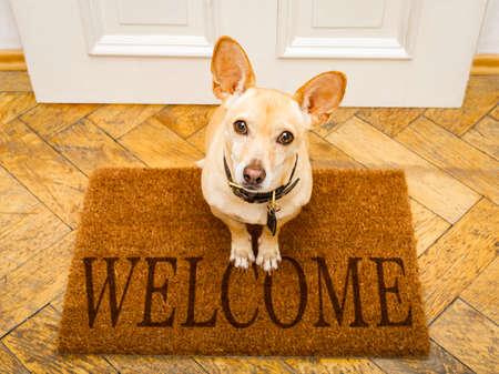 pies podenco czeka na zabawę właściciela i idzie na spacer po wycieraczce, za wejściem do domu i tabliczką powitalną