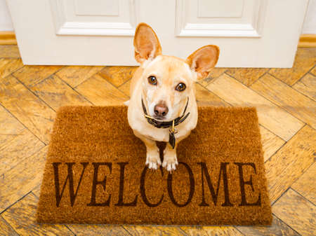 podenco dog waiting for owner to play  and go for a walk on door mat ,behind home door entrance and welcome sign Фото со стока