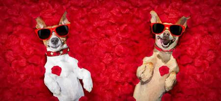 Podenco Hund ruht in einem Bett aus Rosenblättern zum Valentinstag glücklich mit lustigen roten Sonnenbrillen