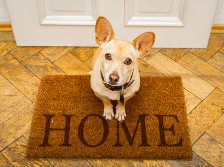 Chien podenco attendant que le propriétaire joue et se promène sur un tapis, derrière l'entrée de la maison Banque d'images - 94444165