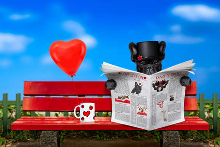 french bulldog dog reading a newspaper or magazine sitting on a bench at the park, dating and in love,