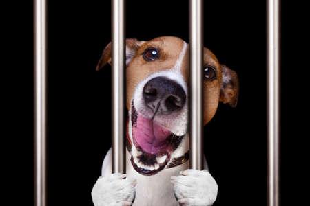 criminal dog behind bars in police station, jail prison, or shelter  for bad behavior Stock Photo