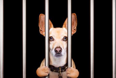 criminal dog behind bars in police station, jail prison, or shelter  for bad behavior Archivio Fotografico