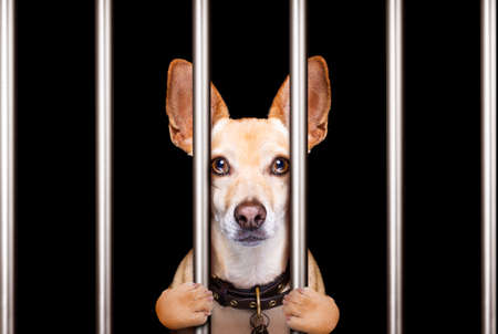 criminal dog behind bars in police station, jail prison, or shelter  for bad behavior Stock Photo