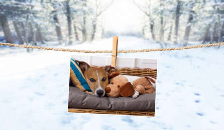 photo of dog hanging on a string with  clothespin, cuddly and warm in winter , with snow as background