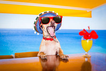 couple of drunk  dogs   with sunglasses in summer vacation holidays   with  cocktail drinks  at the beach bar club