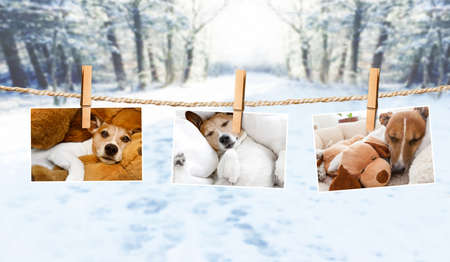 photos of dogs hanging on a string with  clothespin, cuddly and warm in winter , with snow as background