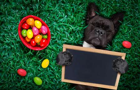 Chien de lapin de Pâques bouledogue français heureux drôle avec beaucoup d'oeufs autour et panier sur l'herbe, tenant une bannière vide vide ou une pancarte Banque d'images - 95968319