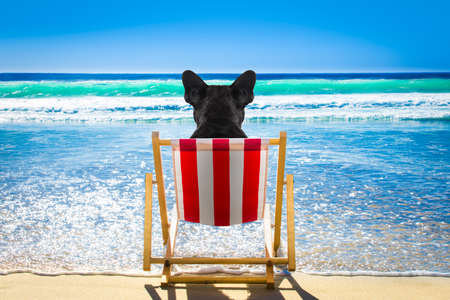 French bulldog dog resting and relaxing on a hammock or beach chair at the beach ocean shore, on summer vacation holidays Stock Photo
