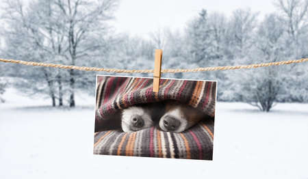 photo of dogs hanging on a string with  clothespin, cuddly and warm in winter , with snow as background