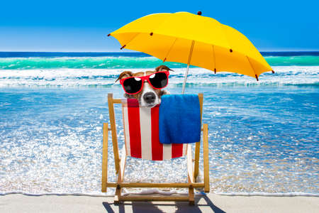 jack russell dog resting and relaxing on a hammock or beach chair under umbrella at the beach ocean shore, on summer vacation holidays,