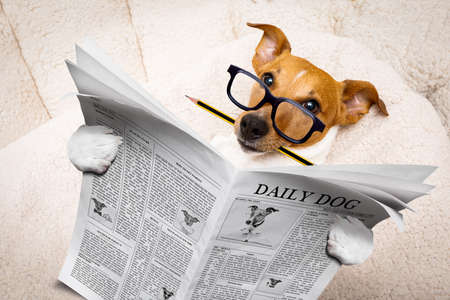 cool funny jack russell  dog reading a newspaper magazine wearing reading glasses, with pencil in mouth Stock Photo