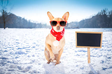 cool funny freezing icy dog in snow with sunglasses and scarf, sitting and waiting to go for a walk with owner, blackboard to the side Stock Photo