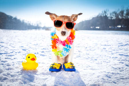 cool funny freezing icy dog in snow with sunglasses and flower chain , waiting for the summer to come very soon