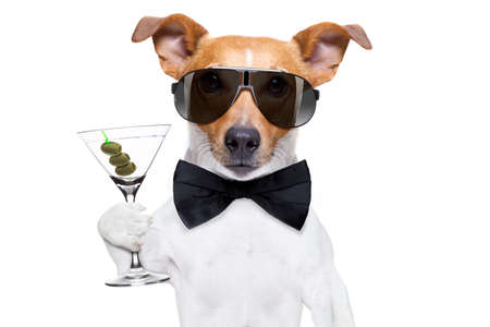 drunk jack russell dog toasting  and drinking a cocktail  martini drink with olives, isolated on white background