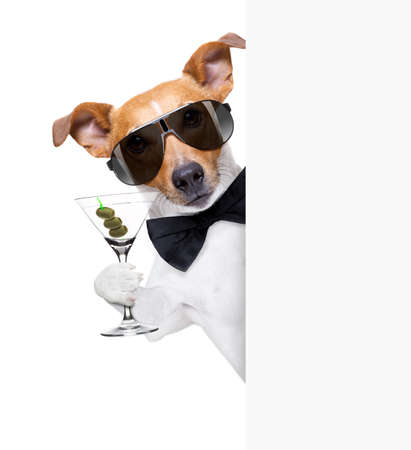 drunk jack russell dog toasting  and drinking a cocktail  martini drink with olives, isolated on white background , behind white blank banner or placard Stock Photo