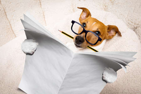cool funny jack russell  dog reading a  blank empty newspaper magazine wearing  glasses, with pencil in mouth Stock Photo