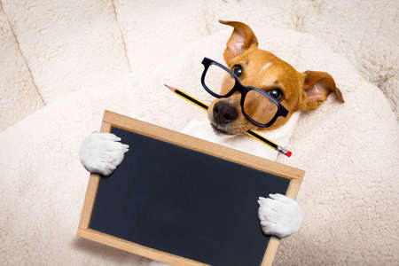 office worker businessman jack russell dog  as  boss and chef ,  with pencil or pen  in  mouth, holding banner or placard Stock Photo
