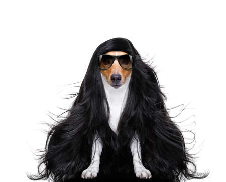 hairdresser dog ready to look beautiful by comb, scissors, dryer, and spray at the wellness spa salon, isolated on white background with very long hair Stock Photo