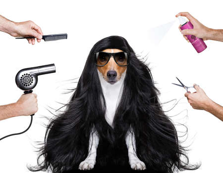 hairdresser dog ready to look beautiful by comb, scissors, dryer, and spray at the wellness spa salon, isolated on white background with very long hair Archivio Fotografico