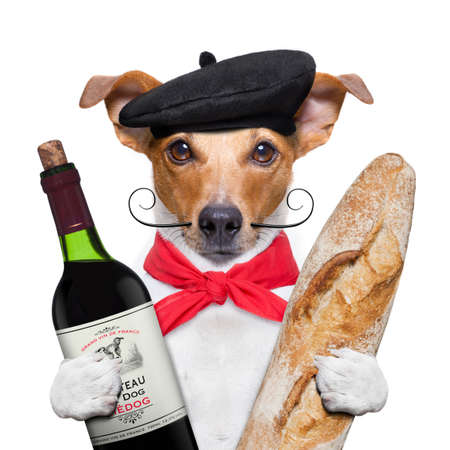 french jack russell  dog  with  red wine baguette and  beret, isolated on white background