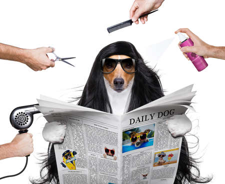 hairdresser dog ready to look beautiful by comb, scissors, dryer, and spray at the wellness spa salon, isolated on white background with very long hair , reading a magazine Stock Photo