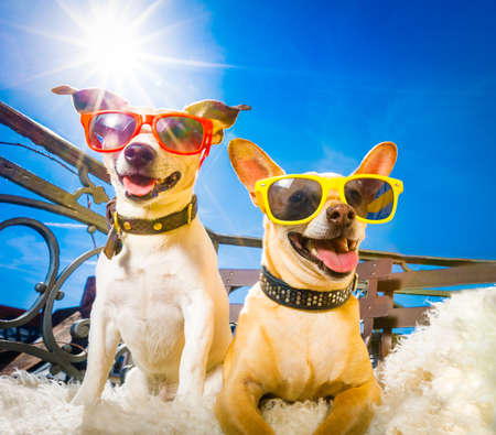 couple of dogs  with sunglasses at balcony  enjoying the sun and hot weather at summer vacation holidays Stock Photo