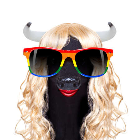 gay pride cow as drag queen standing for  social equality, for csd, christopher street day or  homosexual parade Stock Photo