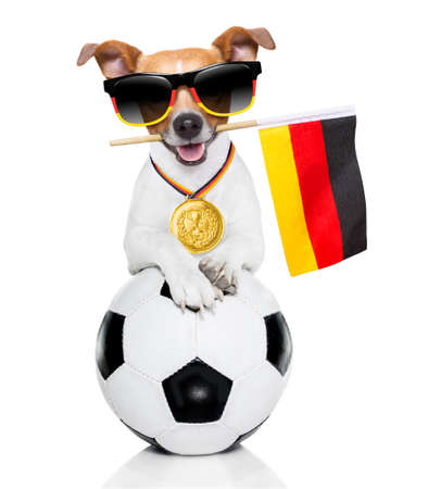 soccer jack russell  dog playing with leather ball  , isolated on white background and german  flag wearing sunglasses Stock Photo