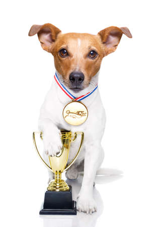 jack russell dog with  a golden winner trophy holding with paw, isolated on white background Stock Photo