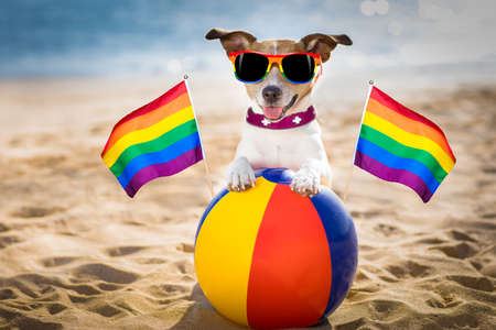 gay dog resting and relaxing on  beach ball at the  ocean shore, on summer vacation holidays
