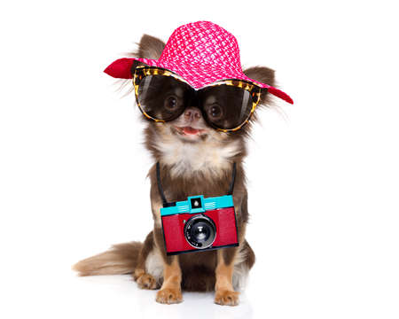 chihuahua dog looking so cool with fancy sunglasses  and photo camera ready for summer vacation