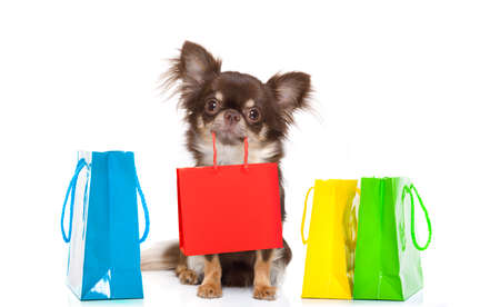 chihuahua dog holding a shopping bag ready for discount and sale at the  mall, isolated on white background Foto de archivo