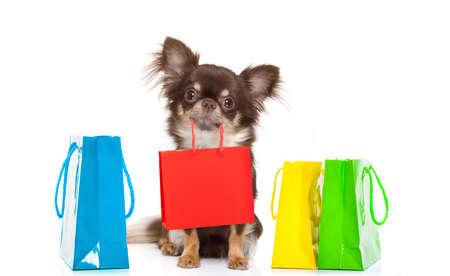 Perro chihuahua sosteniendo una bolsa de compras listo para descuento y venta en el centro comercial, aislado sobre fondo blanco. Foto de archivo