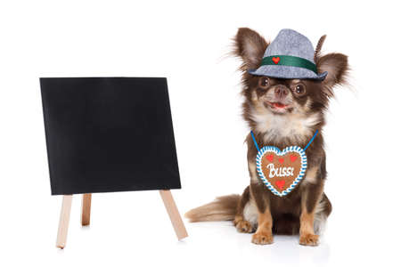 bavarian chihuahua dog with owner  isolated on white background , ready for the beer celebration festival in munich placard or banner to the side