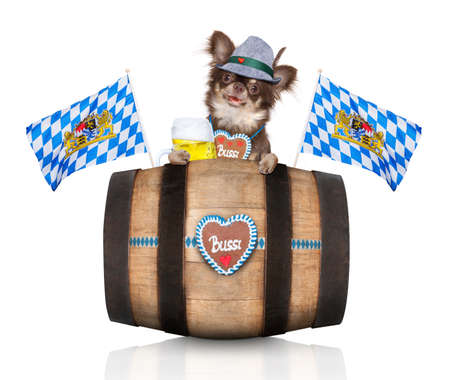 bavarian chihuahua dog with owner  isolated on white background , ready for the beer celebration festival in munich