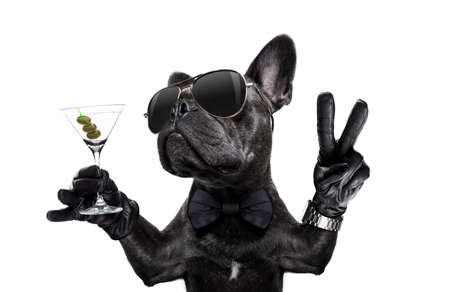 french bulldog dog with martini cocktail and victory or peace fingers wearing a retro wrist watch Archivio Fotografico - 106195391