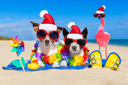 dog and owner sitting close together at the beach on summer vacation holidays, close to the ocean shore and a pink gay flamingo Фото со стока
